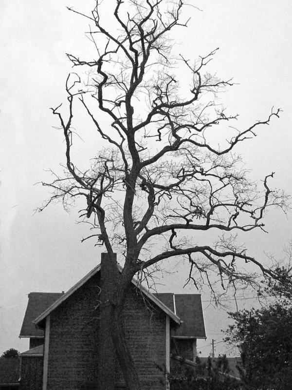 Tree Print featuring the photograph Gnarled by Pamela Patch