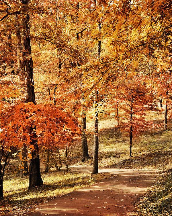 Autumn Print featuring the photograph Golden Path by Jai Johnson