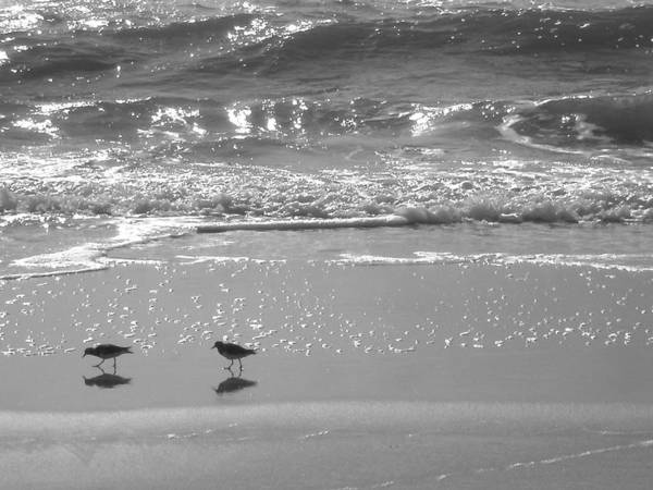 Beach Print featuring the photograph Gulls Taking A Walk by Cindy Lee Longhini