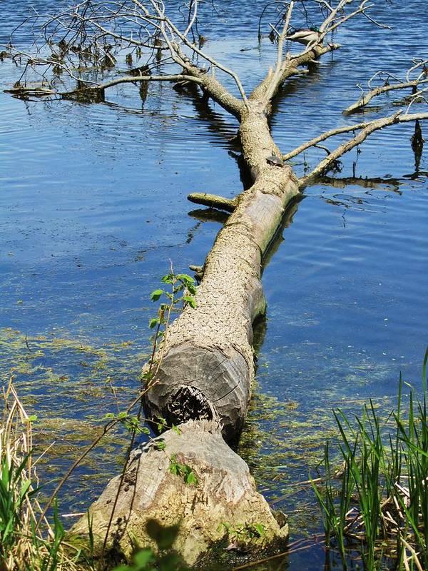 Herrick Lake Print featuring the photograph Herrick Lake by Todd Sherlock
