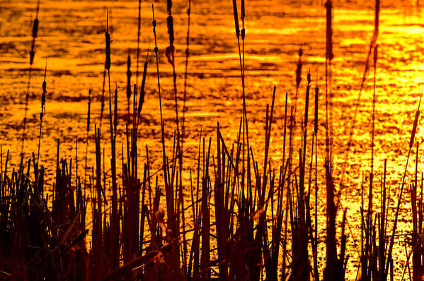 Horicon Print featuring the photograph Horicon Cattail Marsh Wisconsin by Steve Gadomski