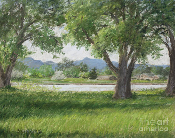 Afternoon Landscape Of Cottonwoods Casting Shadows Across Sunlit Grass With Lake And Rocky Mountain Foothills In The Background. It Is A Soothing Urban Nature Print featuring the mixed media In Passing by Susan Driver
