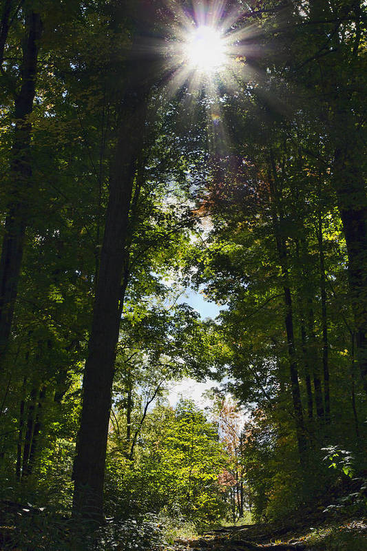 Fall Print featuring the photograph Into The Light by Peter Chilelli