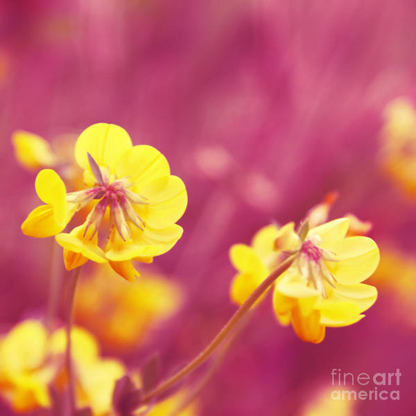 Pink Print featuring the photograph Joyfulness by Aimelle
