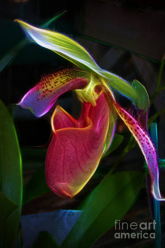 Paphipedelium Print featuring the photograph Lady's Slipper by Judi Bagwell