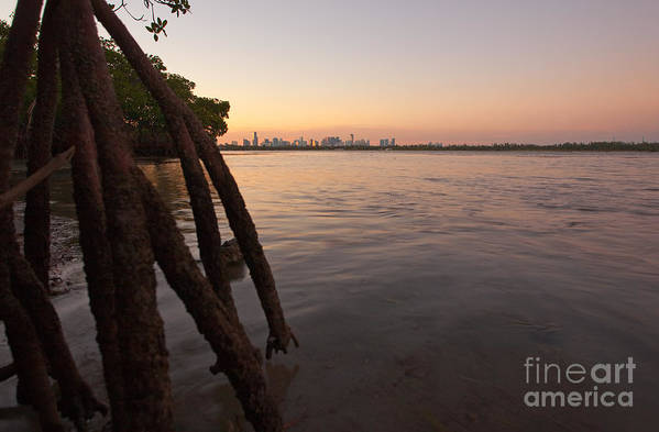 Miami Print featuring the photograph Miami And Mangroves by Matt Tilghman