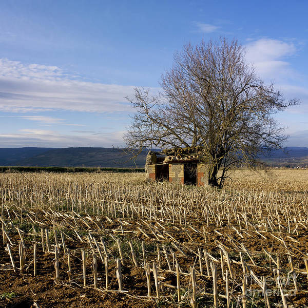 Zea Print featuring the photograph Old Hut Isolated In A Field. Auvergne. France by Bernard Jaubert