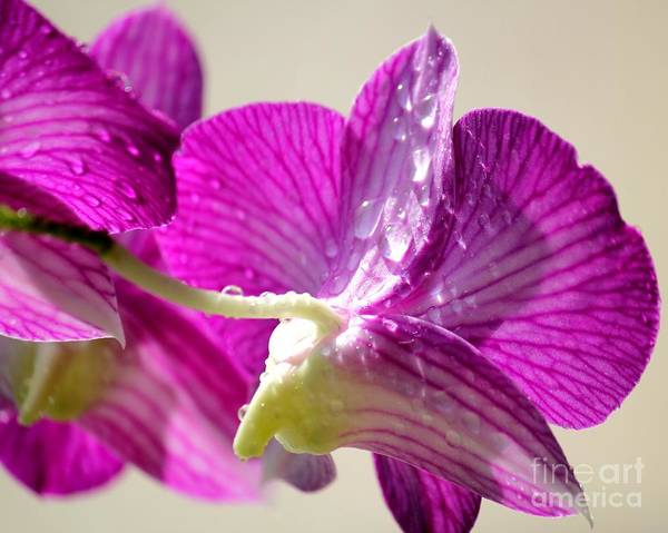 Orchids Print featuring the photograph Orchids And Raindrops by Theresa Willingham
