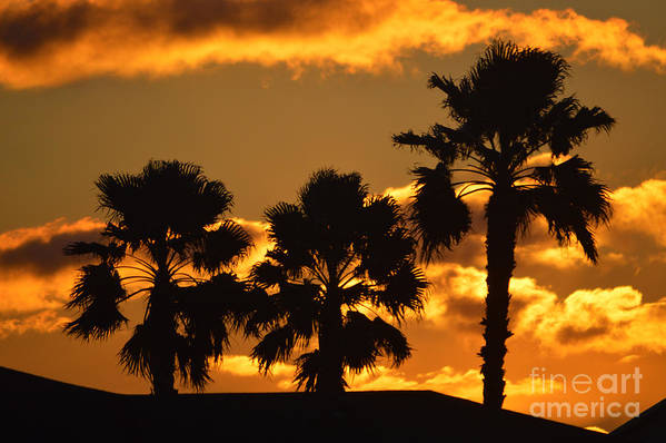 Sunrise Print featuring the photograph Palm Trees In Sunrise by Susanne Van Hulst