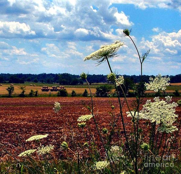 Queen Annes Lace Print featuring the photograph Queen Annes Lace And Hay Bales by Julie Dant