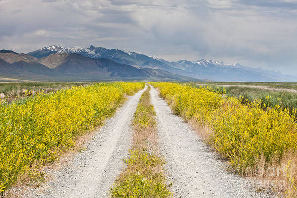 Landscape Print featuring the photograph Ruby Mountains Wildflower Road by Sheri Van Wert