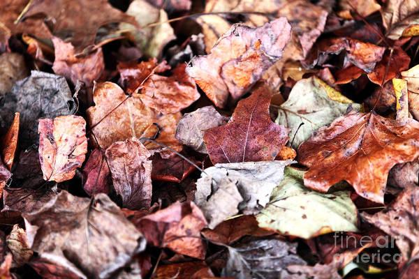 Seasons Change Print featuring the photograph Seasons Change by John Rizzuto