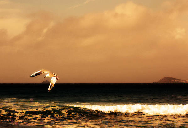 Seagull Print featuring the photograph Sennen Seagull by Linsey Williams