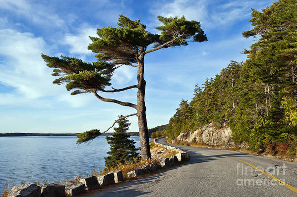Acadia Print featuring the photograph Somes Sound Maine by John Greim