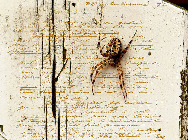 Spider Print featuring the photograph Spider Letter by Yvon van der Wijk