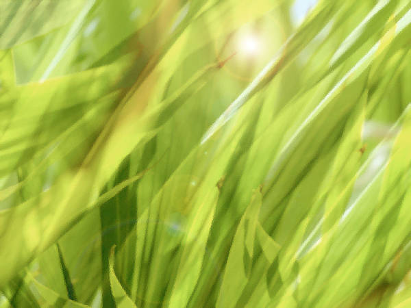 Green Print featuring the photograph Summertime Green by Ann Powell