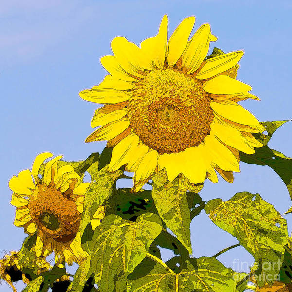 Sunflowers Print featuring the digital art Sunflowers In Morning by Artist and Photographer Laura Wrede