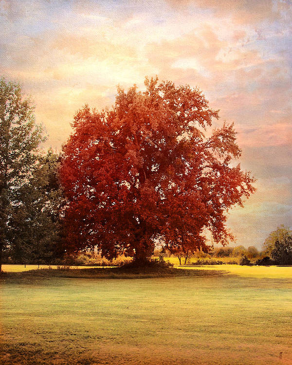 Autumn Print featuring the photograph The Healing Tree by Jai Johnson