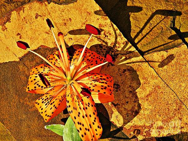 Lily Print featuring the photograph Tiger Lily Still Life by Chris Berry