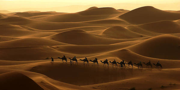 Camel Print featuring the photograph Camel Caravan In The Erg Chebbi Southern Morocco by Ralph A Ledergerber-Photography