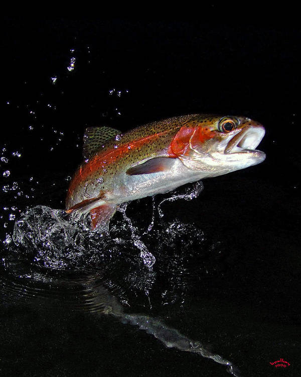 Rainbow Trout Print featuring the photograph 3d Rainbow by Brian Pelkey