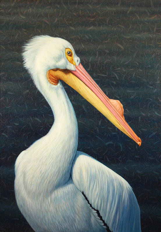 Pelican Print featuring the painting A Great White American Pelican by James W Johnson