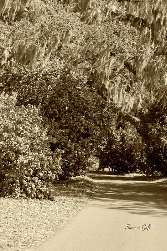 Sepia Print featuring the photograph A Lowcountry Springtime by Suzanne Gaff