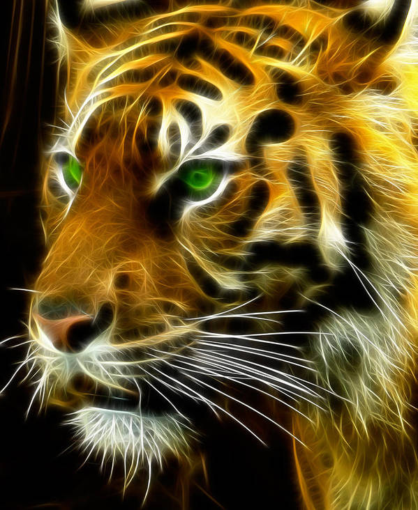 Bengal Print featuring the photograph A Tiger's Stare by Ricky Barnard