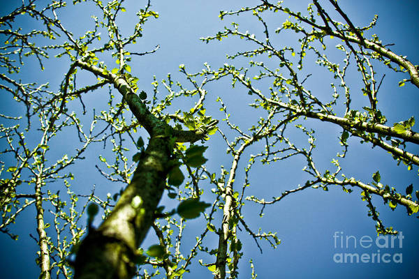 spring Time Print featuring the photograph Baby Spring Tree Leaves 02 by Ryan Kelly