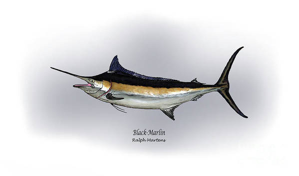 Black Marlin Print featuring the drawing Black Marlin by Ralph Martens