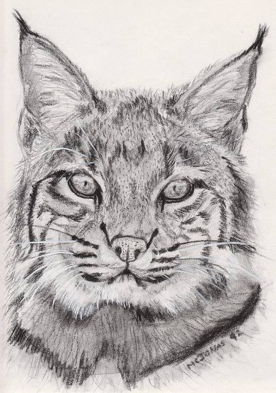 Nature Print featuring the drawing Bobcat by Marqueta Graham