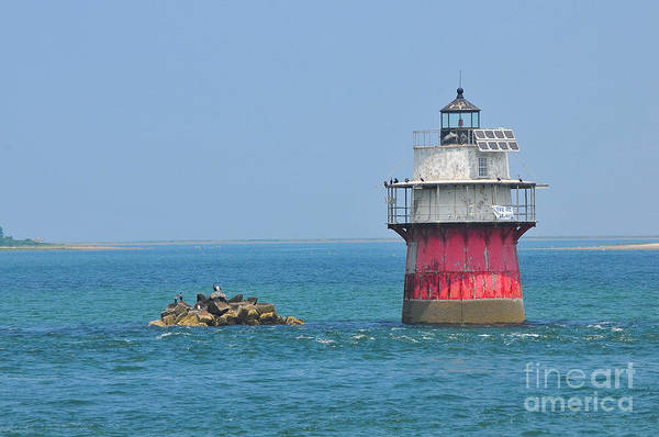 Plymouth Ma Photograph Print featuring the photograph Bug Light by Catherine Reusch Daley