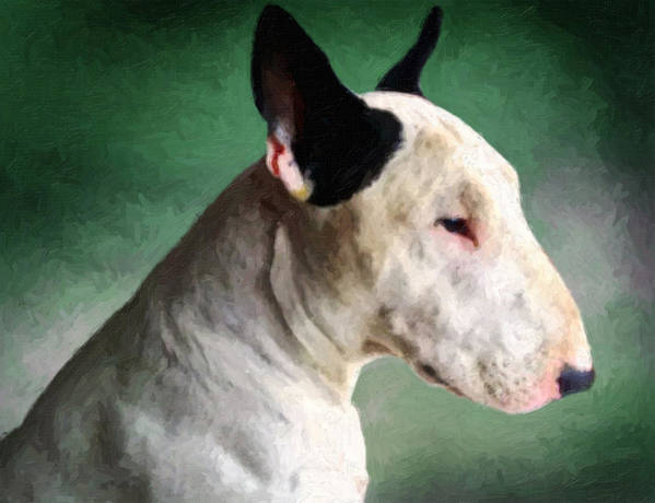 English Bull Terrier Print featuring the painting Bull Terrier On Green by Michael Tompsett