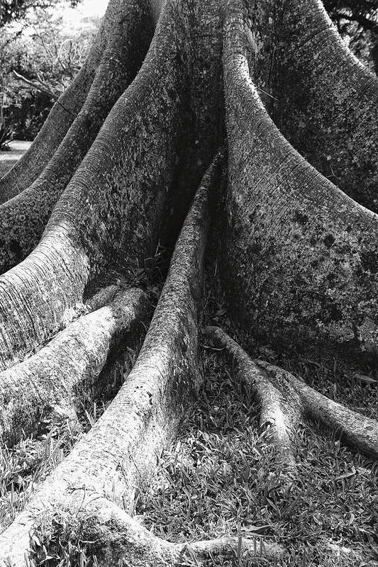 Abstract Print featuring the photograph Ceiba Root by George Oze