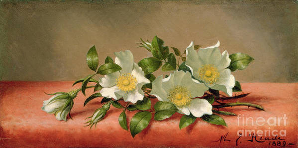Cherokee Roses Print featuring the painting Cherokee Roses by Martin Johnson Heade