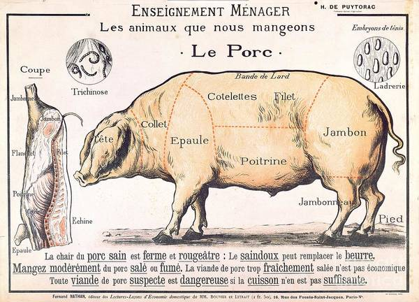 Eating;farm Animals; Cross Section; Loin; Rump; Flank; Butcher; Joint; Pig; Pigs; Shoulder; Ham; Belly; Shoulder; Diagram; Slaughter; Farming; Food Preparation; Domestic Science; Nutrition;teaching;education;home Economics; Farming; Breed;butchering Print featuring the drawing Cuts Of Pork by French School