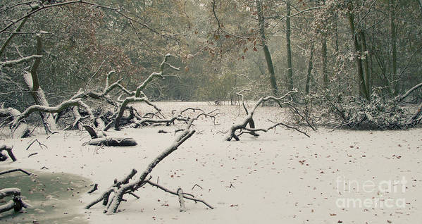 Countryside Print featuring the photograph Frozen Fallen Wide by Andy Smy