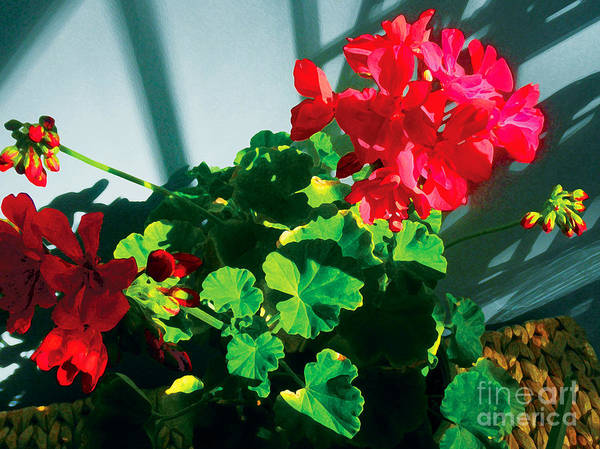 Red Flowers Print featuring the photograph Geranium by David Klaboe