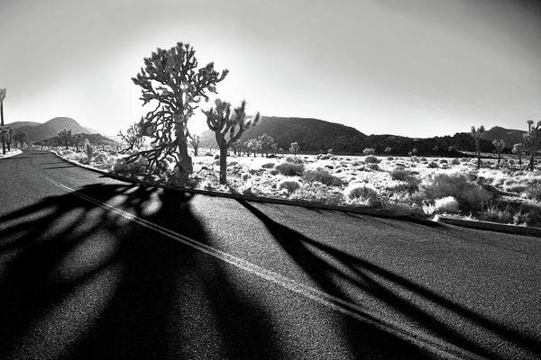 Joshua Tree Print featuring the photograph Ghouls by Laurie Search