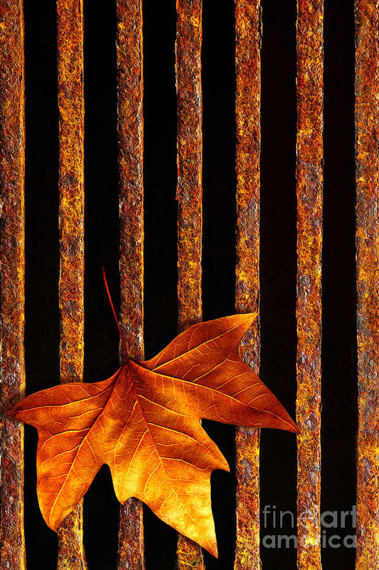 Abstract Print featuring the photograph Leaf In Drain by Carlos Caetano