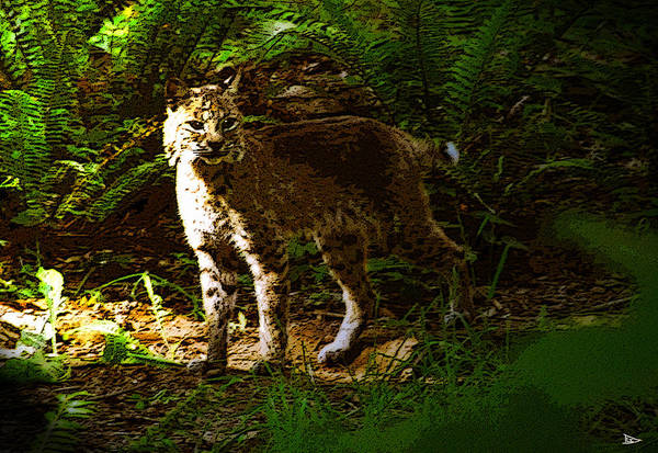 Art Print featuring the painting Lynx Rufus by David Lee Thompson