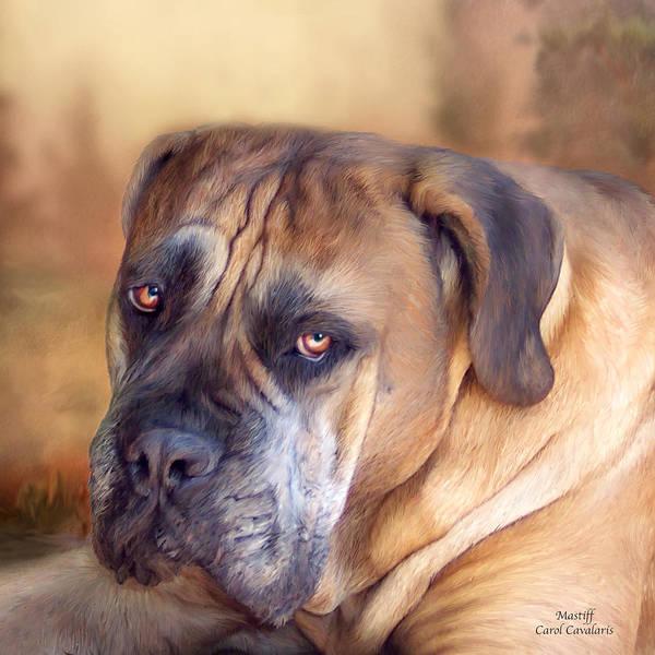 Mastiff Print featuring the mixed media Mastiff Portrait by Carol Cavalaris