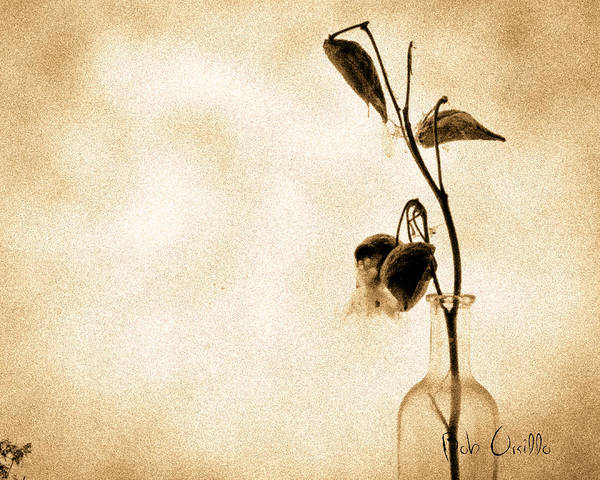 Plant Print featuring the photograph Milk Weed In A Bottle by Bob Orsillo