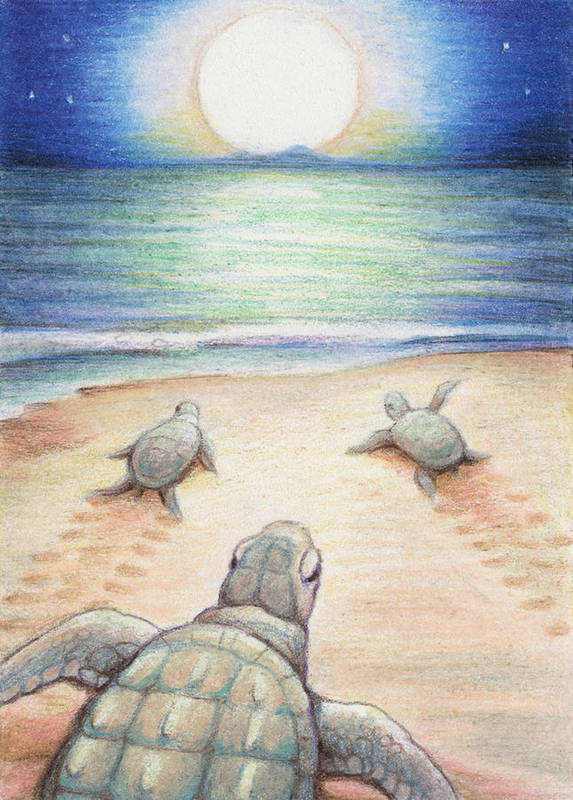 Sea Turtles Print featuring the drawing Moonlit March by Amy S Turner