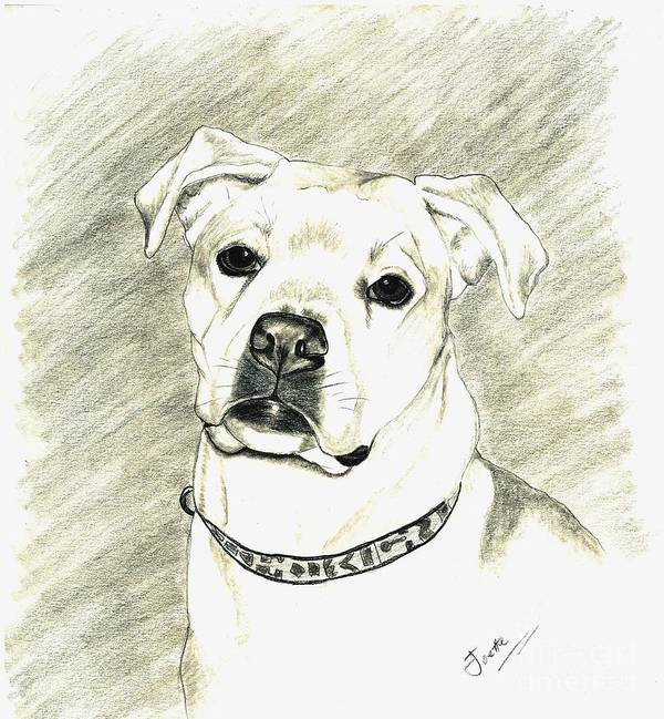 Pet Portrait Print featuring the drawing My Bella by Joette Snyder