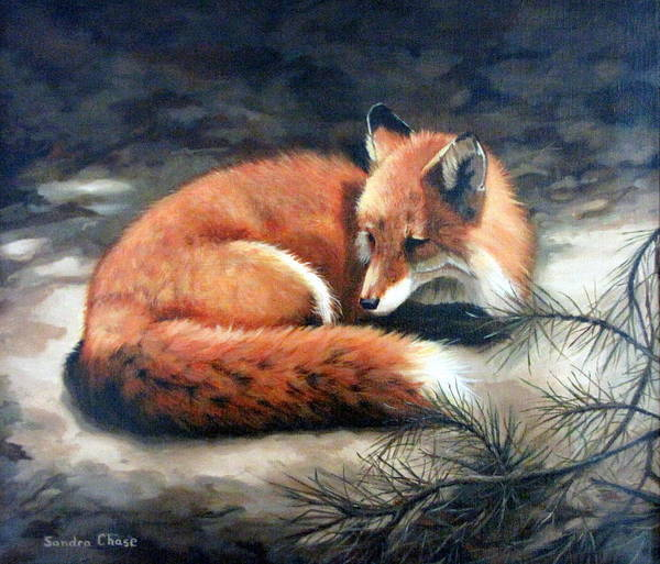 Red Fox Print featuring the painting Naptime In The Pine Barrens by Sandra Chase