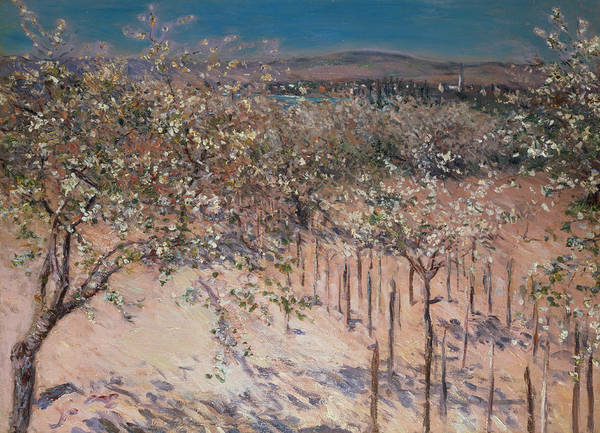 Orchard With Flowering Apple Trees Print featuring the painting Orchard With Flowering Apple Trees by Gustave Caillebotte