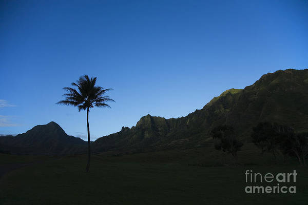 Bright Print featuring the photograph Palm And Blue Sky by Dana Edmunds - Printscapes
