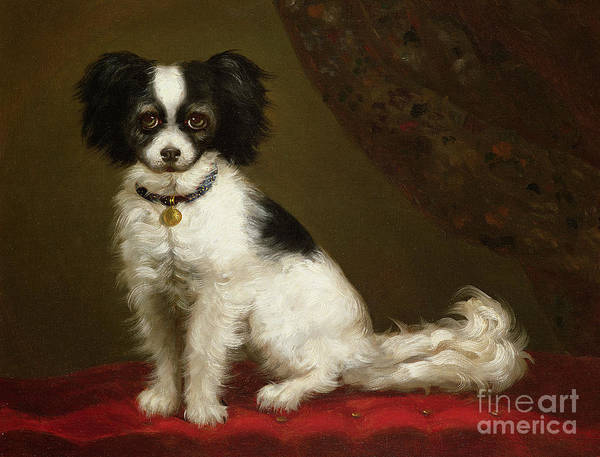 Portrait Of A Spaniel By Anonymous Print featuring the painting Portrait Of A Spaniel by Anonymous