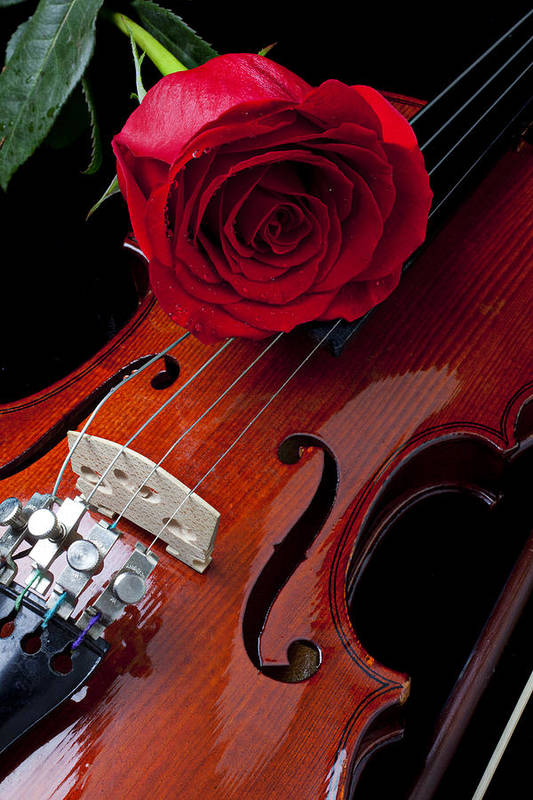 Violin Print featuring the photograph Red Rose With Violin by Garry Gay